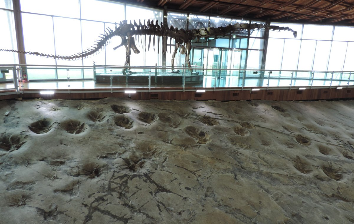 Checking out the sauropod trackway at the Haenam Dinosaur Museum in South Korea https://t.co/xxCHJUNN3x