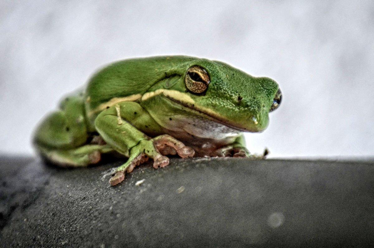 Frog looks pissed.. https://t.co/A1Ad52EkZ7 https://t.co/0cAiG50nj5