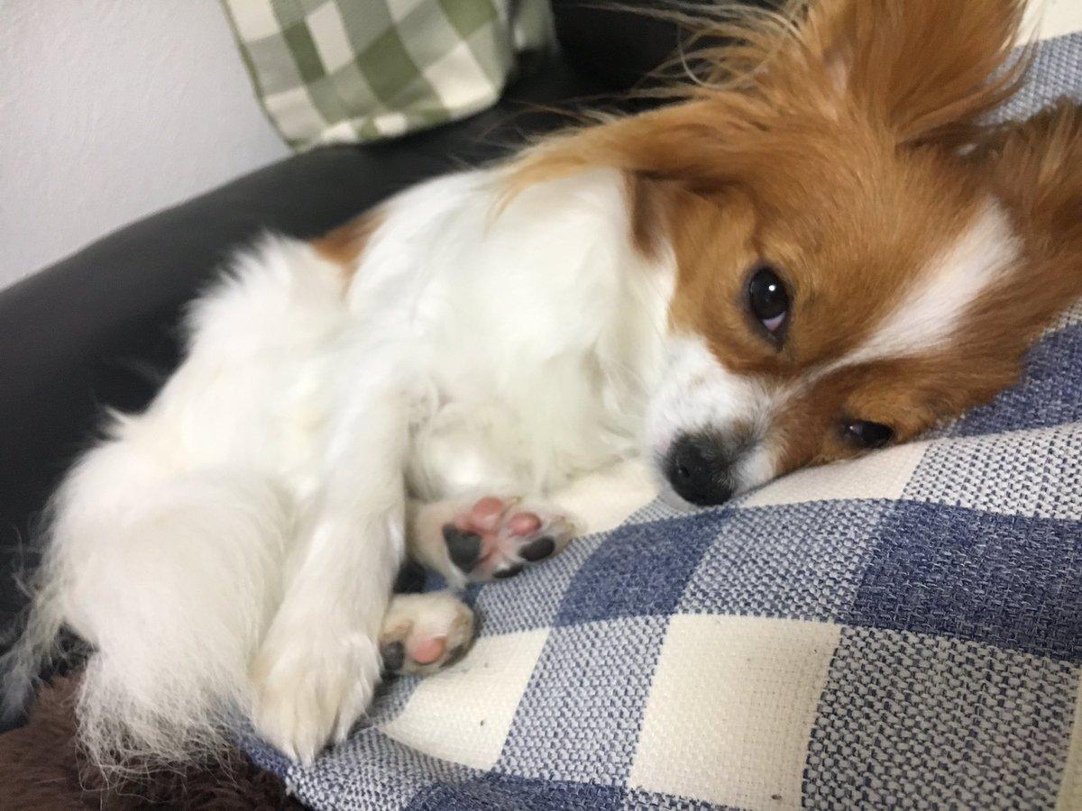 疲れた(´-ω-`)久しぶりに電車寝過ごしたし…笑家着いたらノルンもう寝てた😓明日は訓練頑張ろう#dog #犬 #愛犬