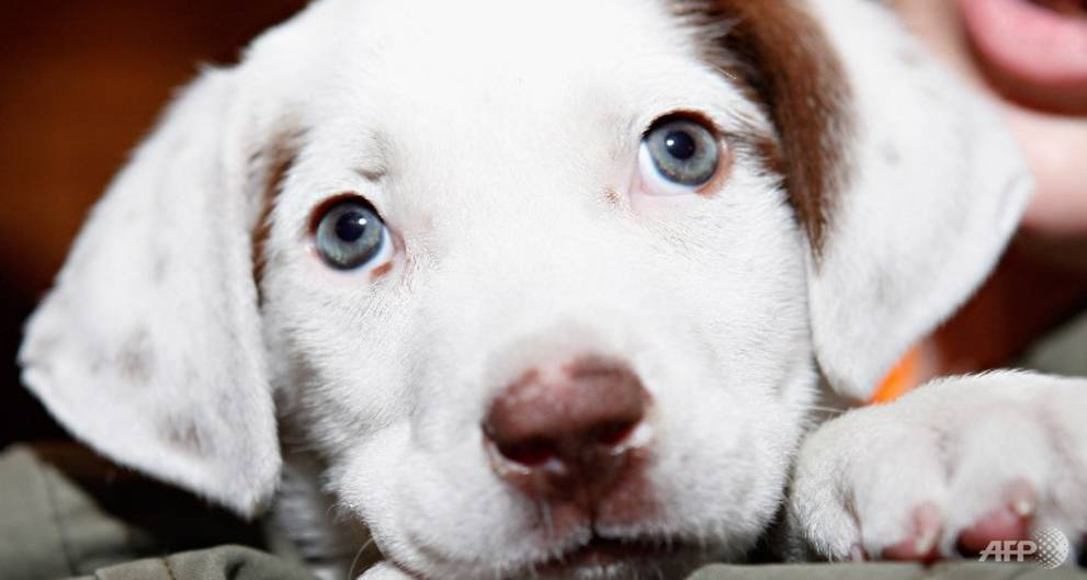 AVA issues code of animal welfare for pet owners