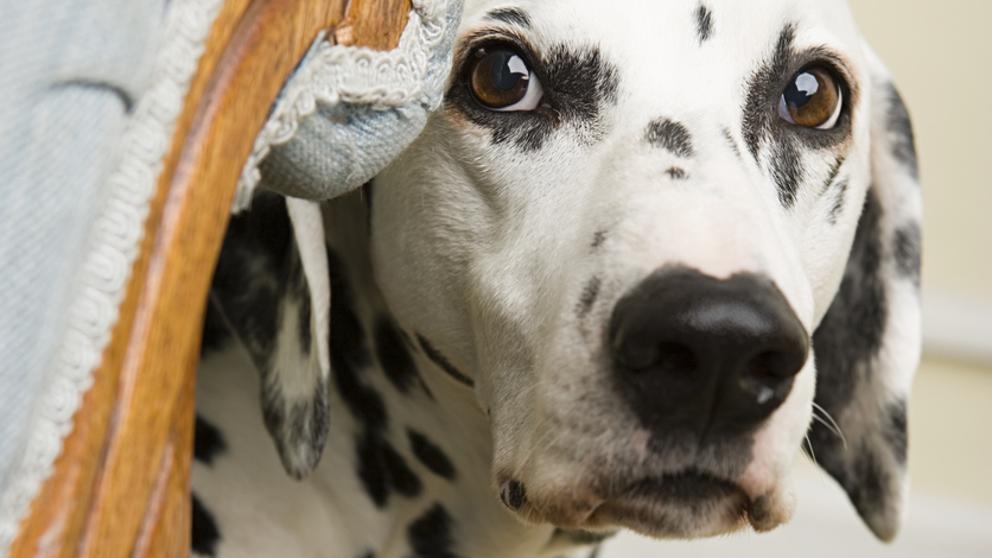 test Twitter Media - Los consejos de expertos para que tu perro no muera de miedo en San Juan.  https://t.co/vRVhJl6whu Vía: @LaVanguardia https://t.co/soiZeeLX2X
