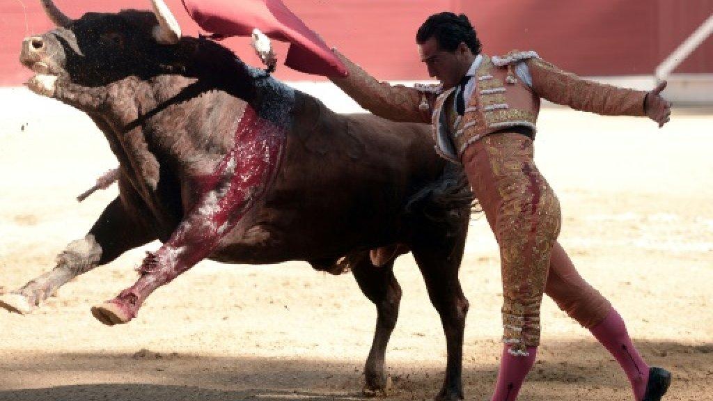 Spain mourns slain matador Fandino