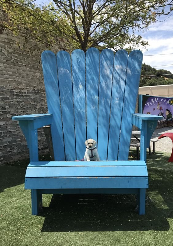 I can't tell if this is a really big chair or a really tiny dog.