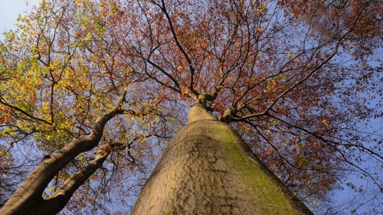 Scientists fear new EU rules may 'hide' forest carbon loss