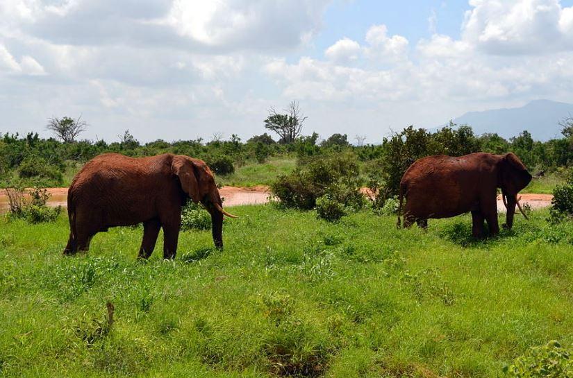 Tsavo Heritage Foundation seeks to grow 40 million trees to reclaim Tsavo ecosystem