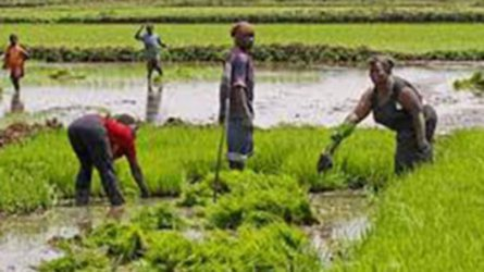Mwea rice farmers disappointed over diversion of millions