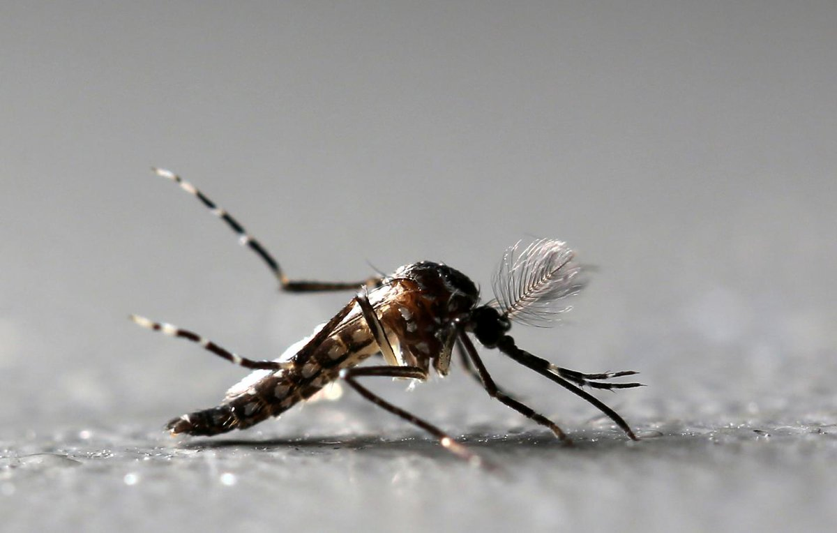Health authorities have found Zika virus mosquitoes in Long Beach, California