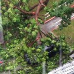 Tree lands on car in Tampines during heavy rain