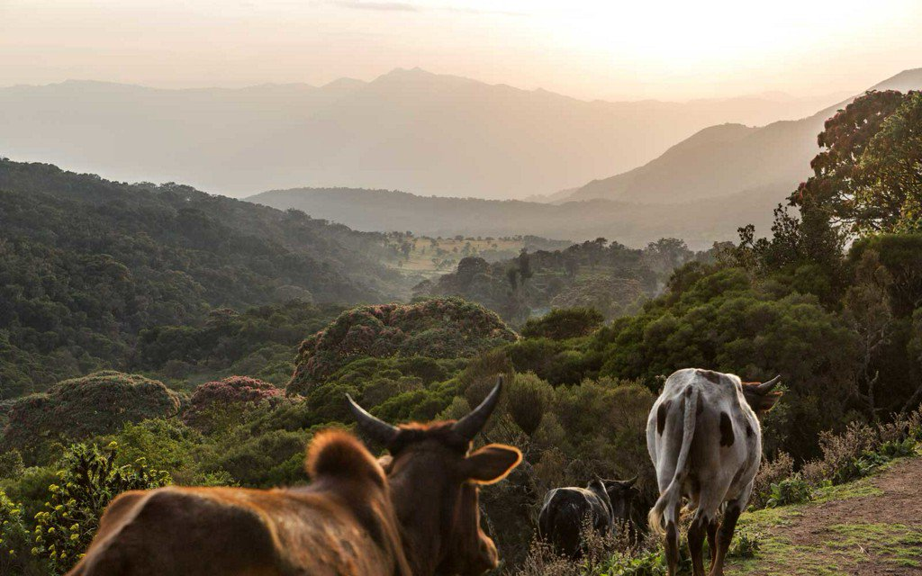 A Journey into Ethiopia's Bale Mountains National Park