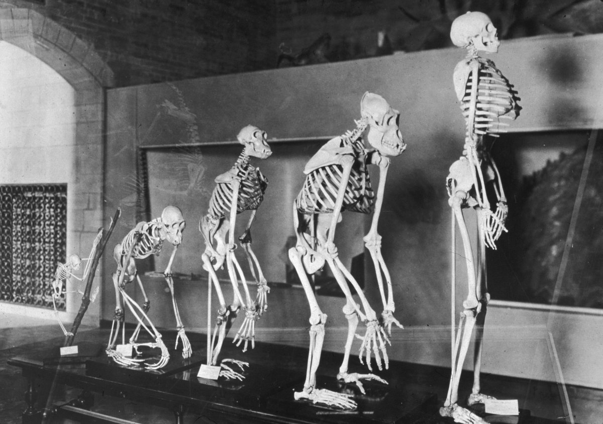 Africa exodus made early humans shorter—it also gave them arthritis