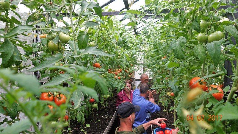 Выращивание овощей в закрытом грунте оквэд 14