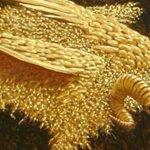 "Georgian Wool: Can It Become the ""Golden Fleece"" Again?"