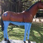 Horse wearing pants is Darwin artists' homage to Daryl Braithwaite