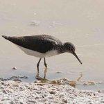 In spite of dry season, Ghadira Nature Reserve teeming with life