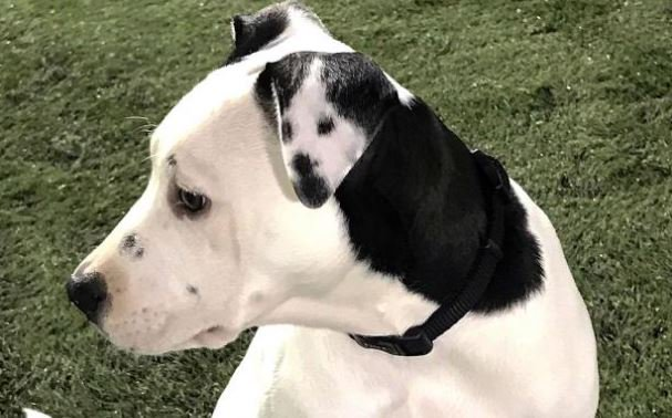 Lucy the puppy appears to have a SELFIE on her ear thanks to a distinctive spot pattern