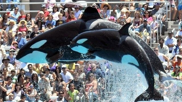 SeaWorld subpoenaed on disclosures related to 2013 documentary 'Blackfish'