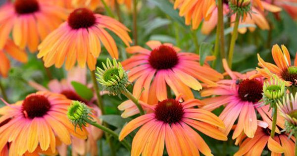 test Twitter Media - 12 plants that help save the bees -- please consider these for your garden! https://t.co/2Q3IAYUsLE https://t.co/NgRQcOycBa