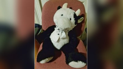 Stuffed cow saves 2-year-old after he tumbles out window