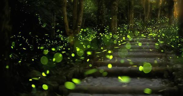 test Twitter Media - Don't you want to see more fireflies in your backyard? Here's how to make it happen https://t.co/80Y3XpDZk4 https://t.co/9kk9iYlyY4