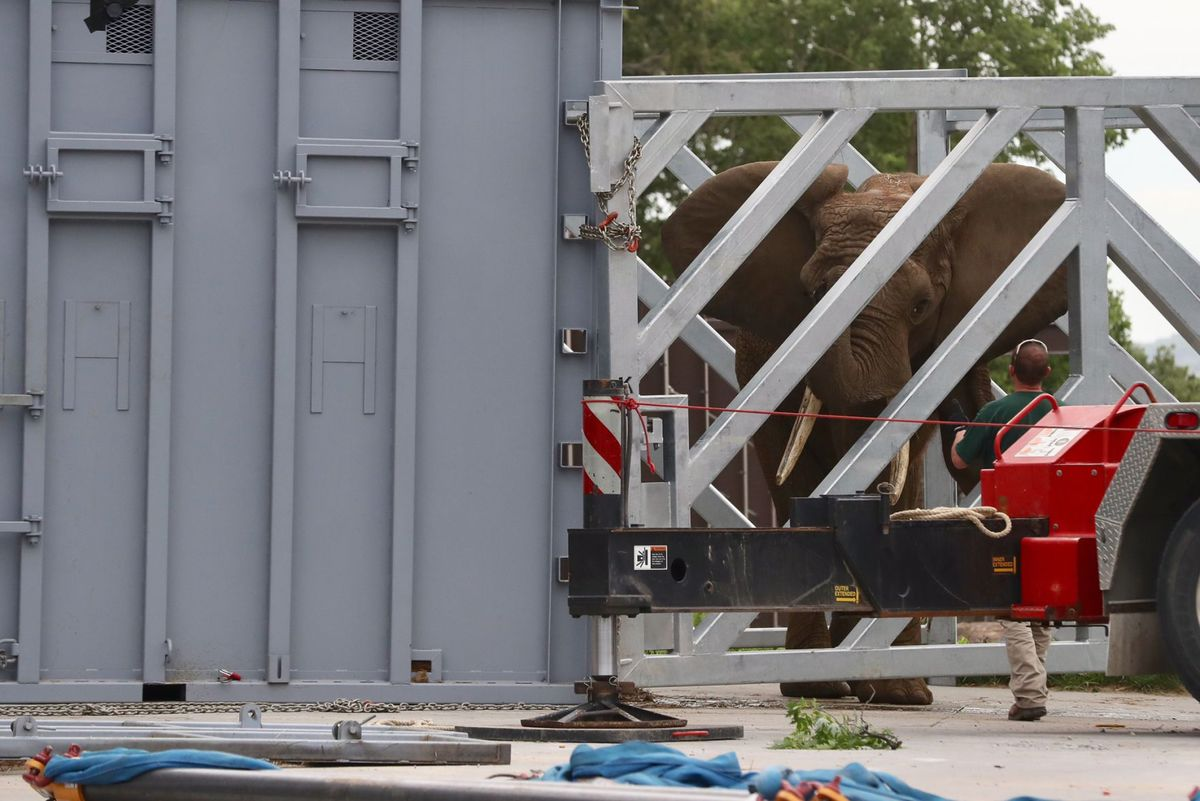 Louie the elephant arrives in Omaha after a 13-hour-47-minute journey from Ohio