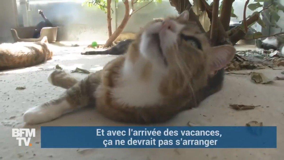 En France, chaque année, 60.000 animaux sont abandonnés par leurs propriétaires 😢
