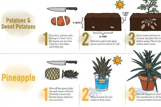 test Twitter Media - 23 Diagrams That Make #Gardening So Much Easier (via @BuzzfeedUK)  What are your top #garden tips? https://t.co/LsfkuLT6NK https://t.co/t9sKZqVsj9
