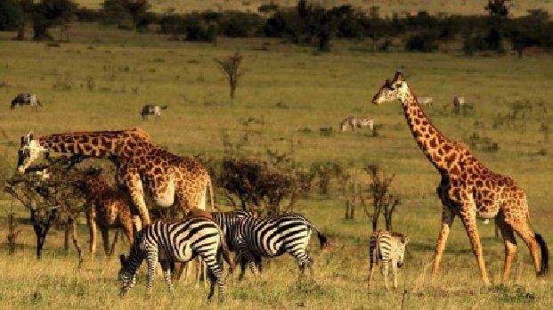 Conservation of wildlife key to economic, GDP growth