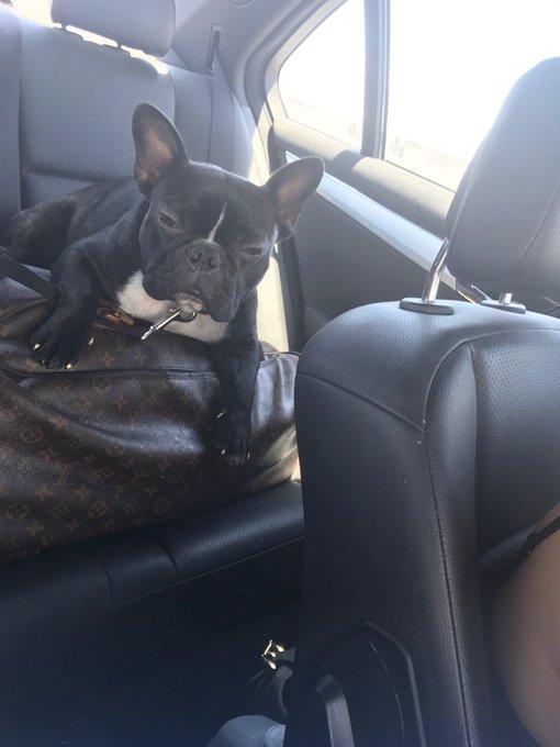 La bound with my Road doggie & bestie @Suziemalone https://t.co/Se686HTHqK