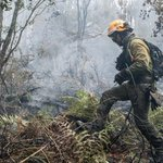 Forest fire in southern Spain hits Donana National Park