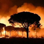 Spain forest fire prompts evacuation of 1,500 people