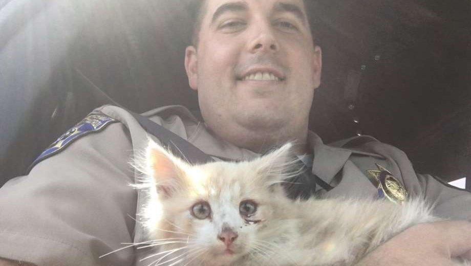 Police rescue kitten on Golden Gate Bridge, officer fosters him