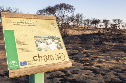 Battle resumes to extinguish fire near Spain's Donana park