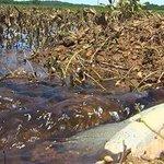 Heavy rain floods soybean crop in Tuscaloosa Co.