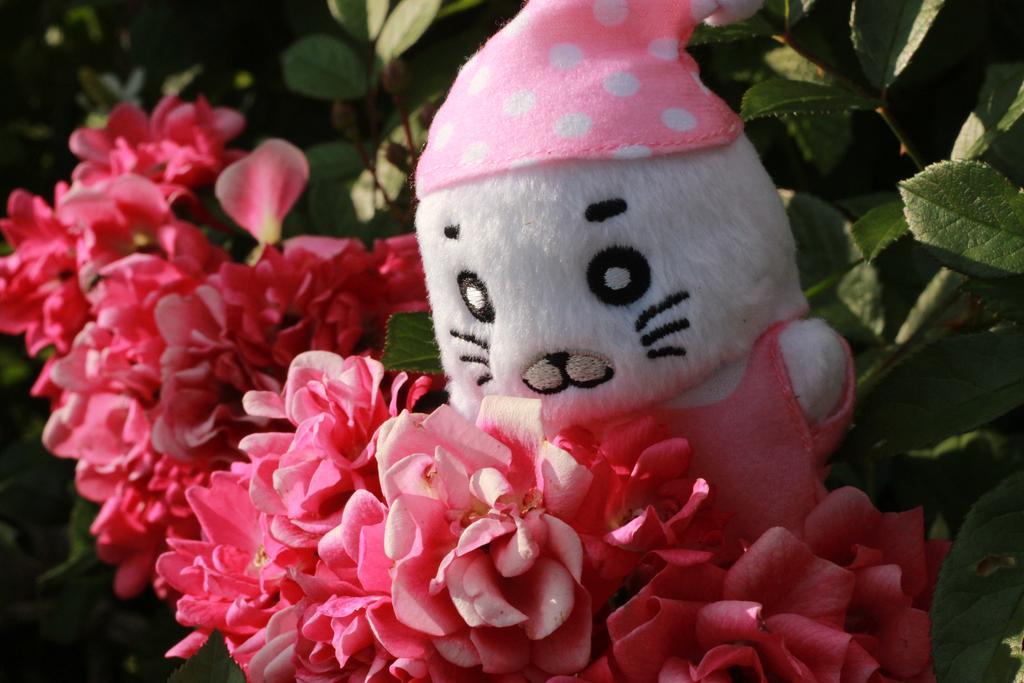 お花が綺麗に咲いていたよ~#ゴマちゃん #ゴマ撮り #ぬい撮り