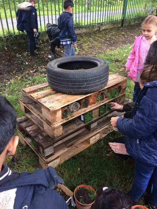 L3 and L4 have started to construct the big hotel. I wonder who or what will come for a visit?#minibeasts https://t.co/v8v0Bd8mx9