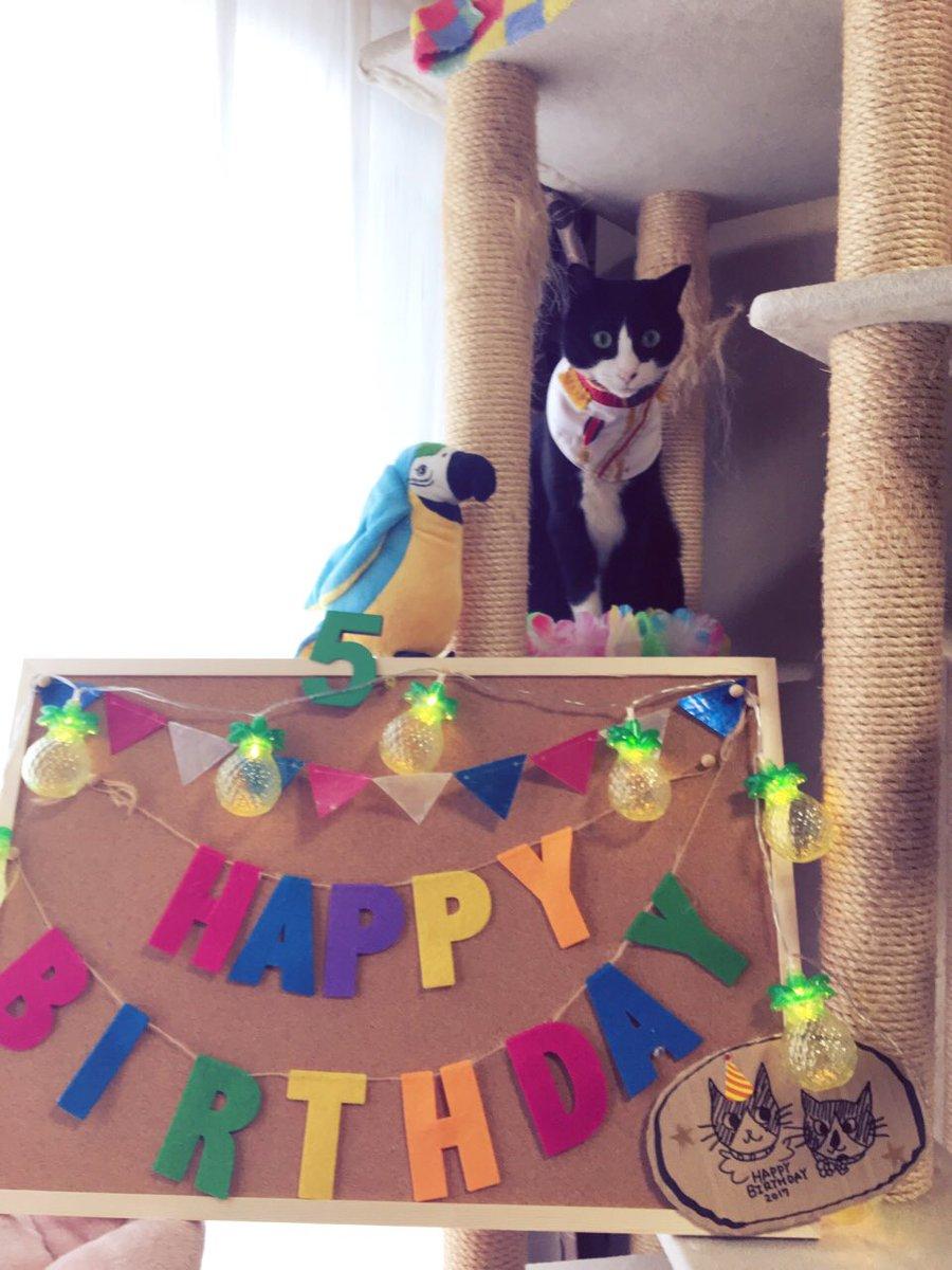 🎉フィガロ今日6/28で5才になりました❗️🎁今年はチビ姫👸しずくちゃんも一緒ににぎやかなお祝いになりました🎂✨✨#Ha