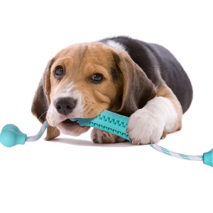 Dog Chew Toy Rubber Dental Massaging Toys  For Dog Cat Pet Training Have Fun ... https://t.co/73psvdufdQ https://t.co/T5UJ4lMrEP