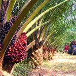 School syllabus may soon include palm oil chapters