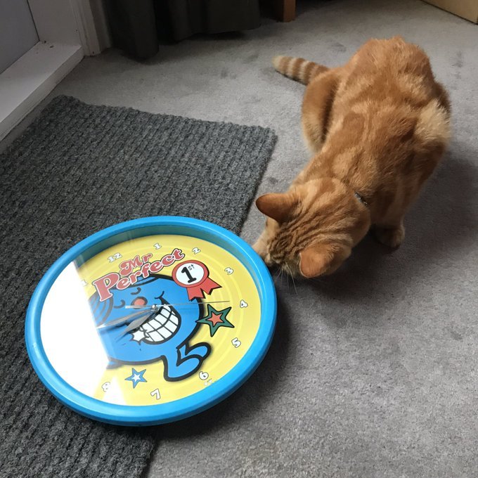 Who needs expensive cat toys. A clock will do. #cats #rescuecats @kitteninn_nz https://t.co/lDJdcueB4Y