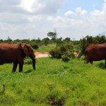 Tsavo Heritage Foundation to launch initiative to save Tsavo ecosystem