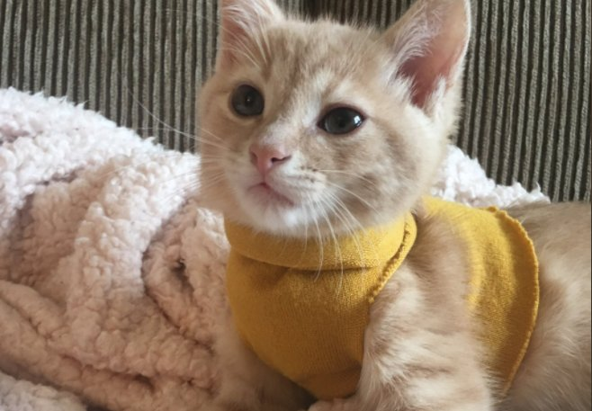 RT @mashable: Stud kitten is feelin' himself after getting a brand new sweater https://t.co/OsrCOEC6ga https://t.co/LhcItFeQeb