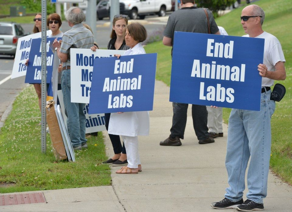 Protesters object to use of live pigs in Baystate Medical Center training program