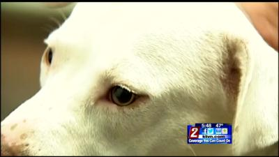 Reminder to Residents to Keep Pets Safe During Upcoming Holiday