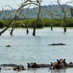 Tanzania's wildlife association okays implementation of power project in the Selous