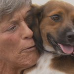 Animal rescue group sends 'dumped dog' from Puerto Rico to new family in Alaska