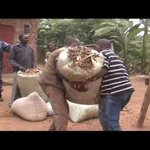 Lwengo farmers protest crackdown by coffee authority