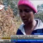 Uvunaji Misitu Kiholela Kiteto