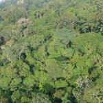 Governo volta a propor redução de floresta nacional na Amazônia