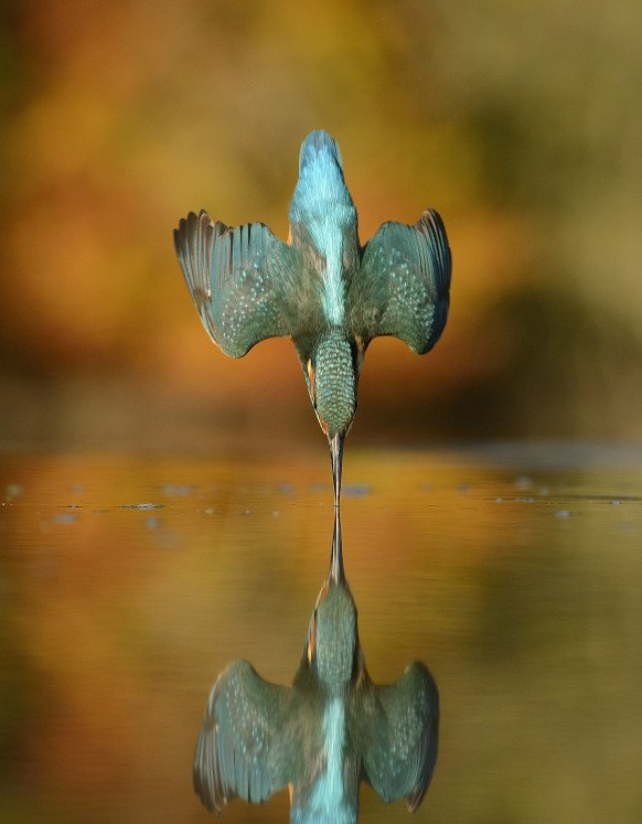 You'll never believe how long it took the photographer to take this kingfisher photo https://t.co/R57SUatnyn https://t.co/1hY45CRAmz