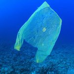 No plastic bag ban for NZ Countdown supermarkets